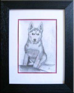 """Husky"" (gerahmt 40 x 50)"